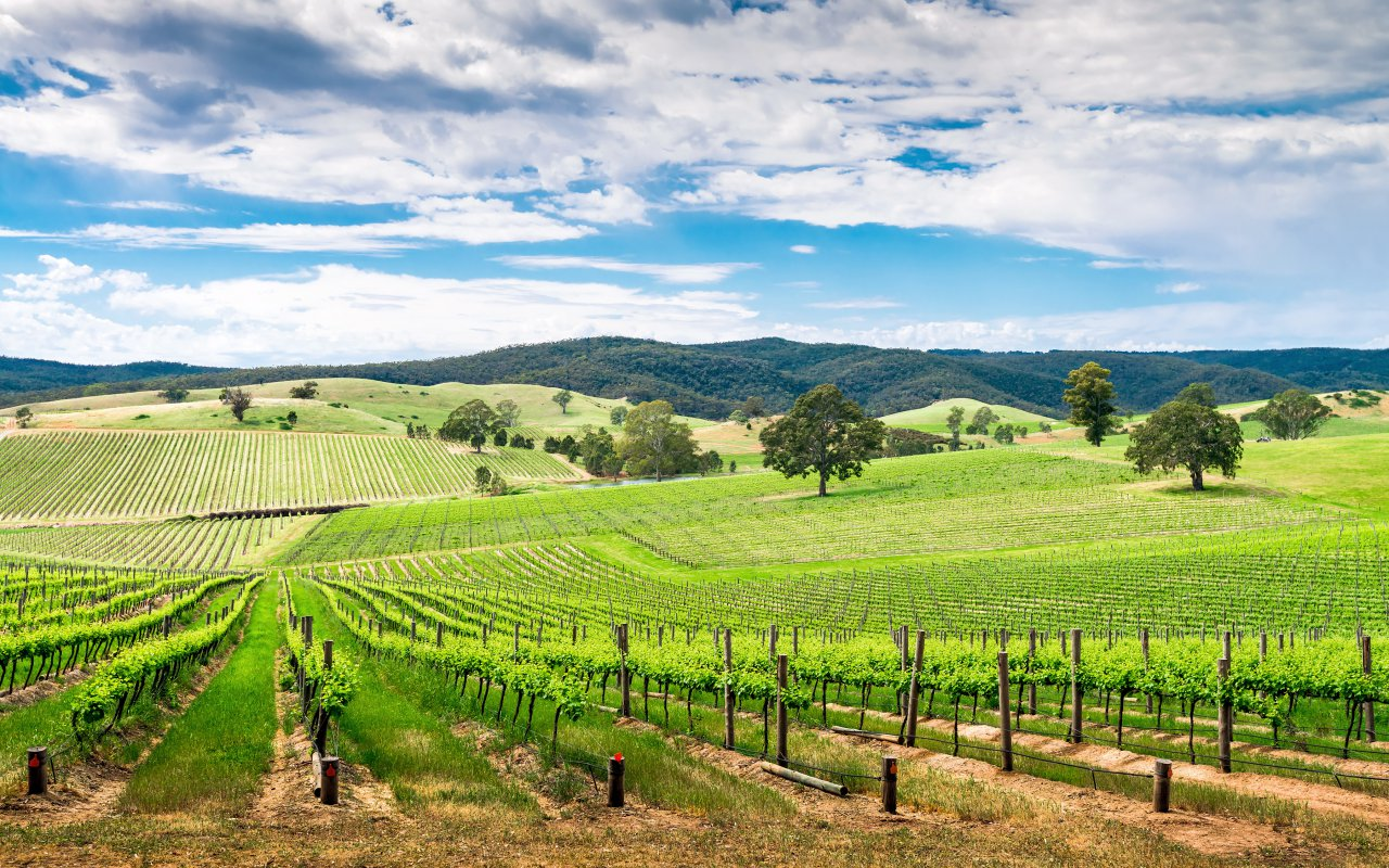 Vignoble de Barossa Valley aux alentours d'Adelaide