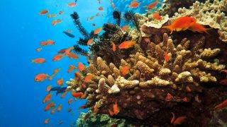Les poissons de la Grande Barrière de Corail en Australie