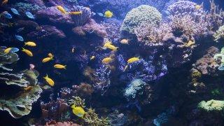 Les îles autour de la grande barrière de corail en Australie