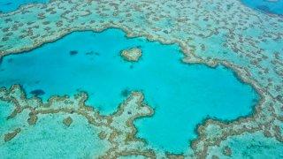 La Grande Barrière de corail : un trésor naturel… si fragile !