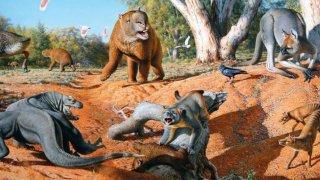 australie megafauna