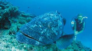 plongée ningaloo reef - voyage australie terra australia