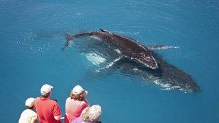 baleine hervey bay - voyage australie terra australia