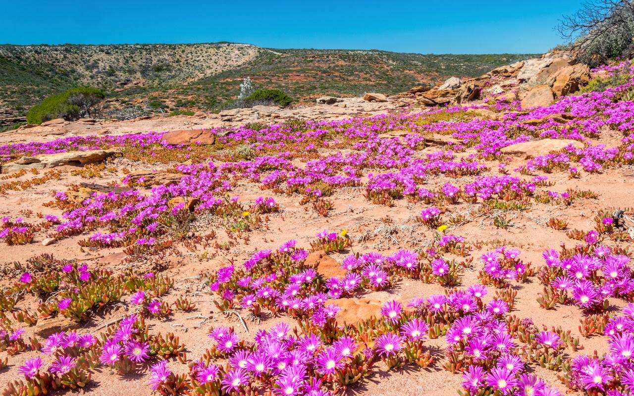 voyage australie fleurs sauvages - terra australia