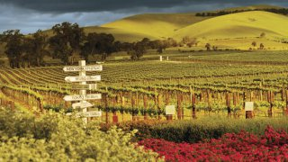 Les vins australiens
