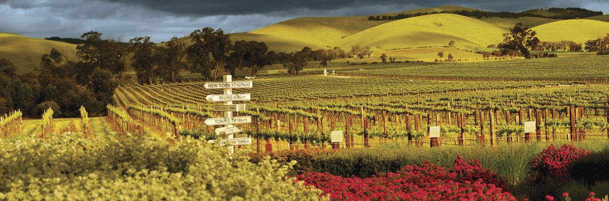 Les vins australiens - terra australia