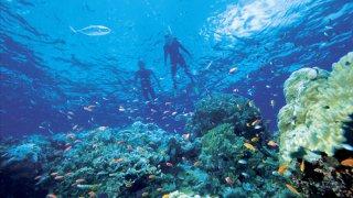 Snorkeling Grande Barriere