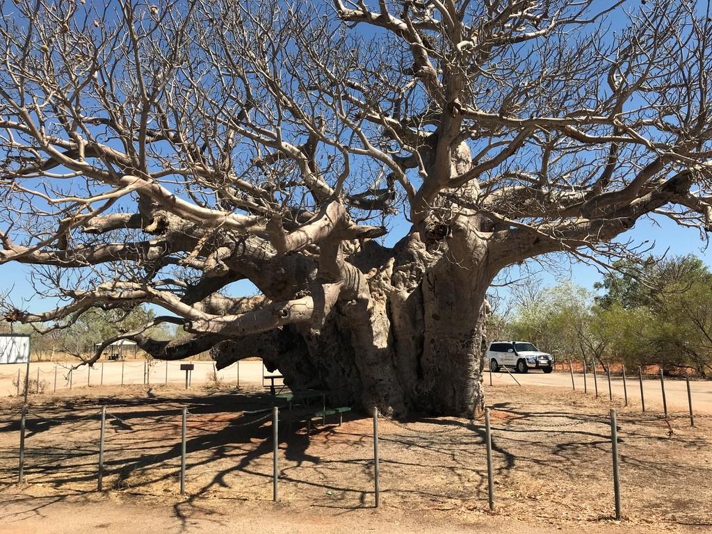 En roadtrip dans les Kimberley en Australie