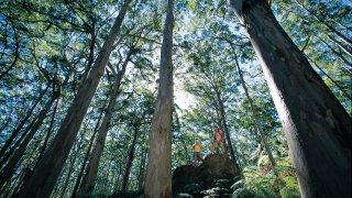 Karri Bonarup NP - voyage australie terra australia
