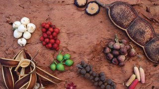 fruits tropicaux rainforest - voyage australie terra australia