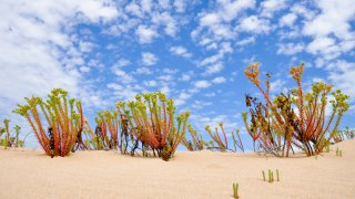 Sand dunes in Coorong National park