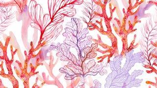 coraux colorés australie