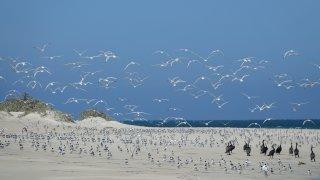 coral bay oiseaux