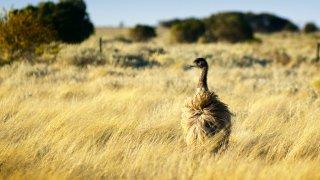 Biodiversité de l'Australie du Sud - voyage australie