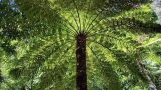 foret pluviale du jurassique - voyage australie terra australia