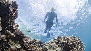 grande barrière plongeur