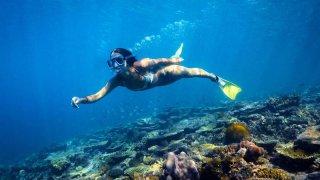 heron island snorkeling