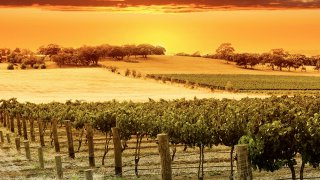hunter valley - voyage australie terra australia