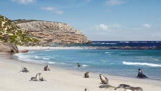 kangaroo island - voyage australie terra australia