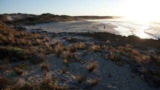 kangaroo - voyage australie terra australia
