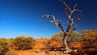 kings canyon - voyage en australie