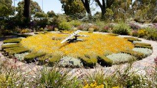 kingspark flower clock - voyage australie terra australia