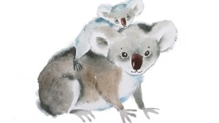 koalas australie