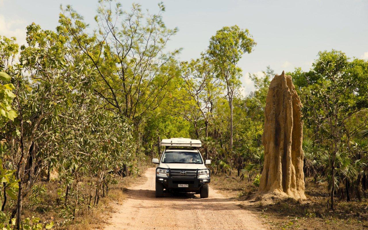 Termite mound Litchfield