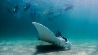 Raie Manta - voyage australie
