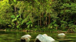 Cairns, Grande Barrière et Rainforest