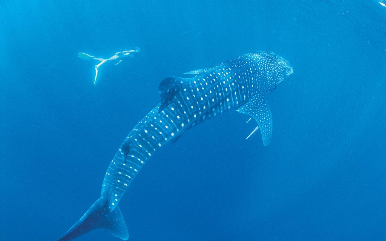 Ningaloo Marine Park - voyage australie terra australia