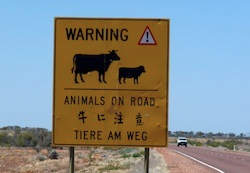 panneaux - voyage australie terra australia