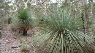 voyage australie flore - kangaroo island