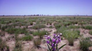 fleurs outback - voyage australie terra australia