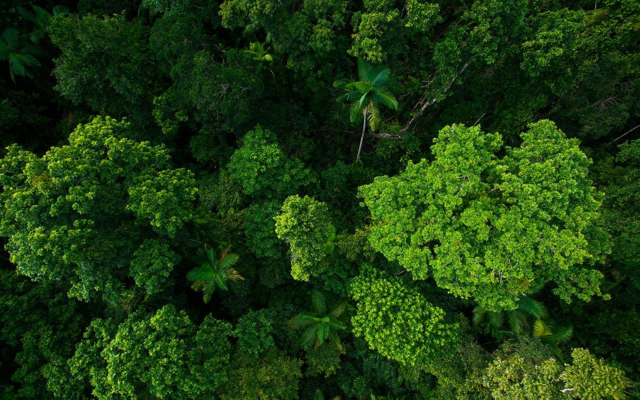 rainforest Kuranda - voyage australie terra australia