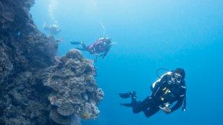 sea dreaming - voyage australie terra australia