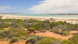 Shark Bay en Australie