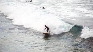 surf sydney - terra australia