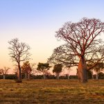 voyage thematique australie terra australia