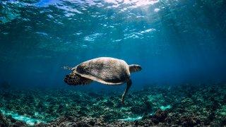 tortue Fitzroy Island - voyage australie terra australia