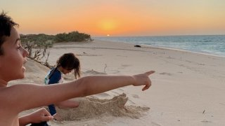 Observation tortue Ningaloo