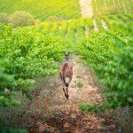 voyage vins australiens - terra australia