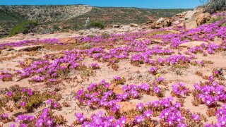 fleurs sauvages kalbarri national park - voyage australie terra australia