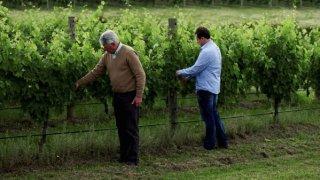 yarra portet wines - voyage australie terra australia